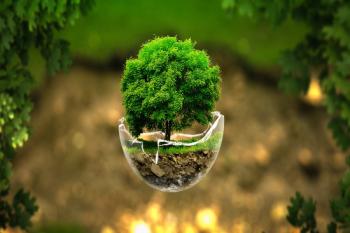Biyoremediasyon  Kirlenmiş Toprak ve Suların Arıtılması